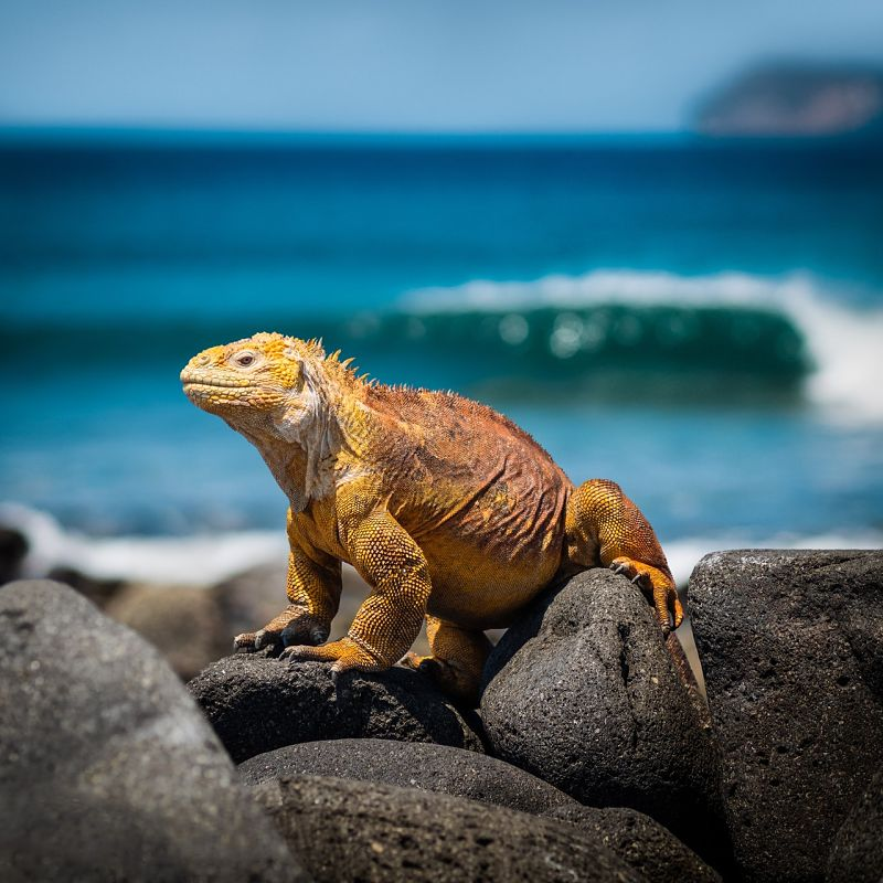 Galapágos island