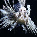 Peces más venenosos del mundo