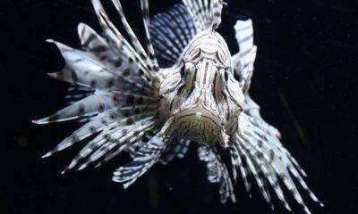 Peces más venenosos del planeta