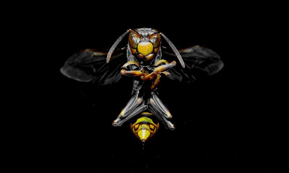 Insectos letales