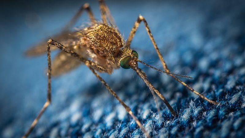 Portador de malaria