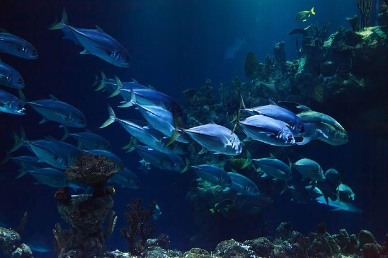 peces en el oceáno