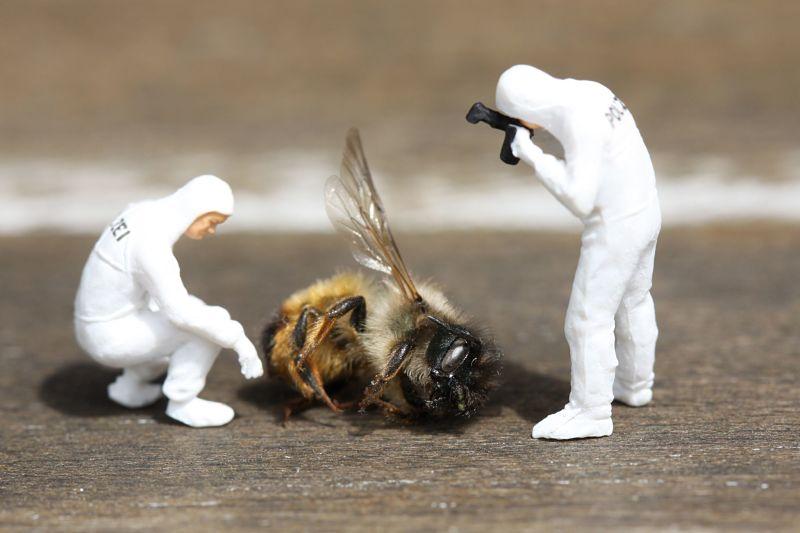 Las abejas no duermen
