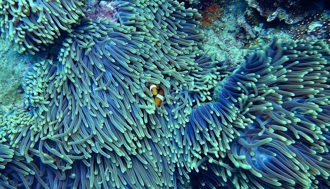 Desaparición de los arrecifes