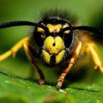 Datos curiosos de las abejas