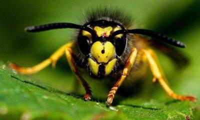 Cosas que no sabías de las abejas
